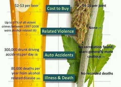 beer drugs weed funny - 8377782016