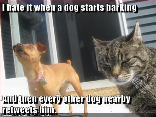 dogs,twitter,tweet,Cats