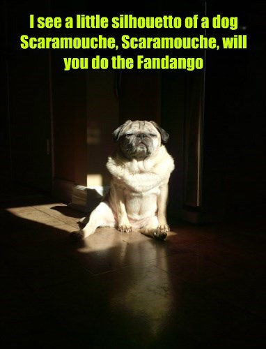 I see a little silhouetto of a dog Scaramouche, Scaramouche, will you do the Fandango