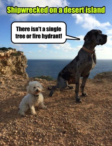 dogs,pee,shipwrecked,fire hydrant,tree