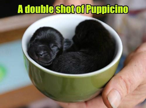 dogs puppy puns coffee Black Lab - 8378126848