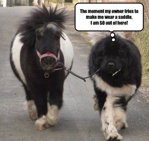 saddle big dog small horse funny captions - 8378202368