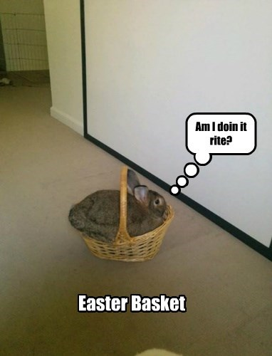 easter if i sits i fits rabbit bunny basket - 8378355200