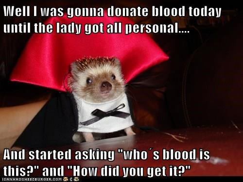animals vampire Blood hedgehog funny donor captions - 8378627328
