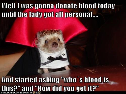 animals vampire Blood hedgehog funny captions - 8378627328