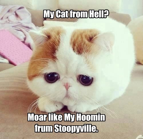 My Cat from Hell? Moar like My Hoomin frum Stoopyville.
