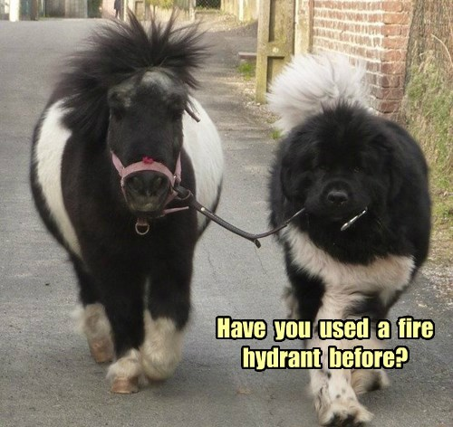 dogs walk miniature horse - 8378812672