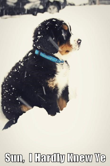 dogs,puppy,winter