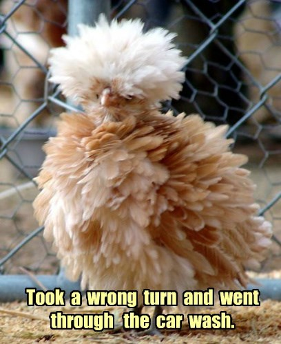 whoops birds Fluffy car wash - 8378825728