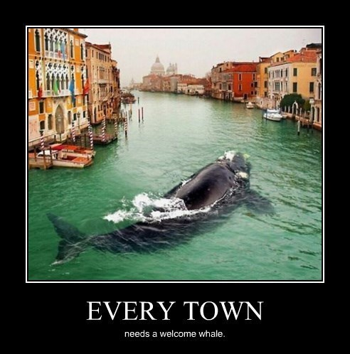 town,whale,cute,funny