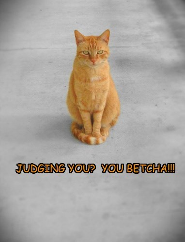 tabby judged Cats hobby - 8379539968