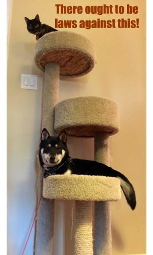 smug Cats law - 8379875840