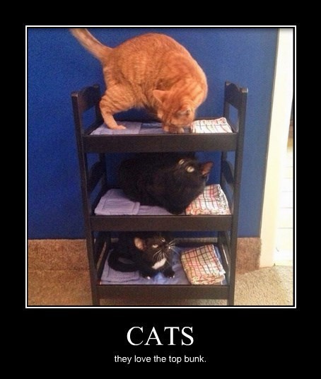 bunk beds cute Cats funny - 8379945728
