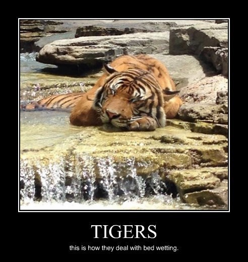 pee tiger bed wetting funny - 8379947008