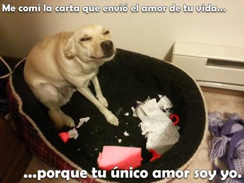 bromas perros Memes animales - 8379950336