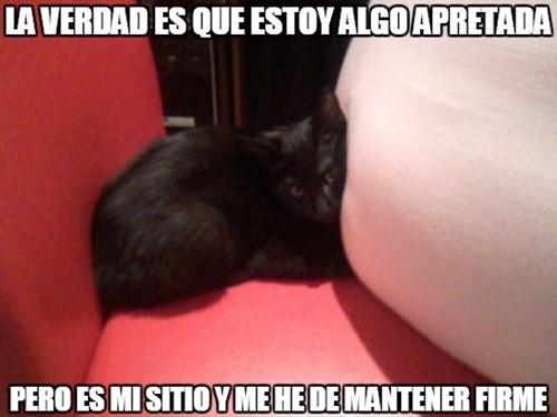 gatos bromas Memes animales - 8379987712