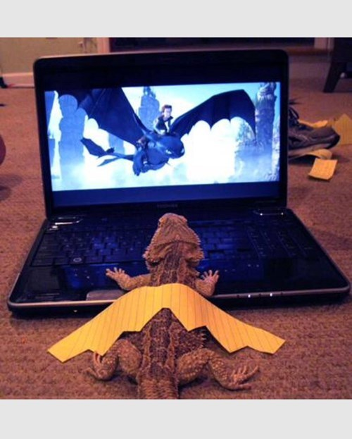 dragon dreams lizard How to train your dragon - 8380050176