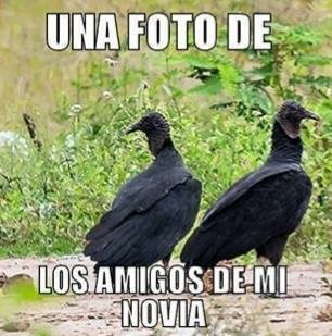 bromas Memes - 8380082944