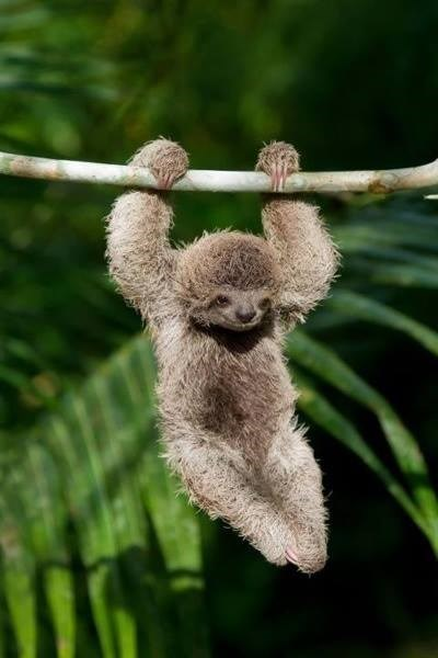 hang time cute sloth - 8380109056
