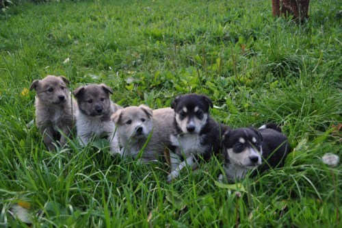 dogs puppies cute - 8380113920
