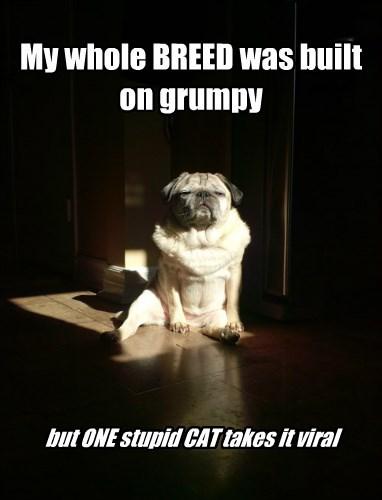 dogs Grumpy Cat pug - 8380175104