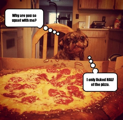 dogs pizza caption funny - 8380247808