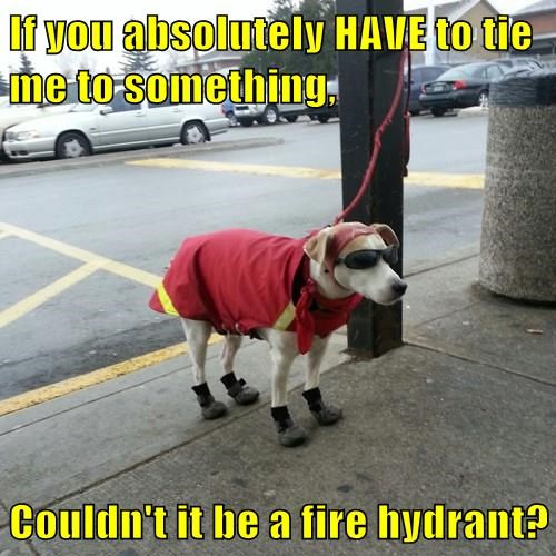 animals dogs captions fire hydrant funny - 8380250112