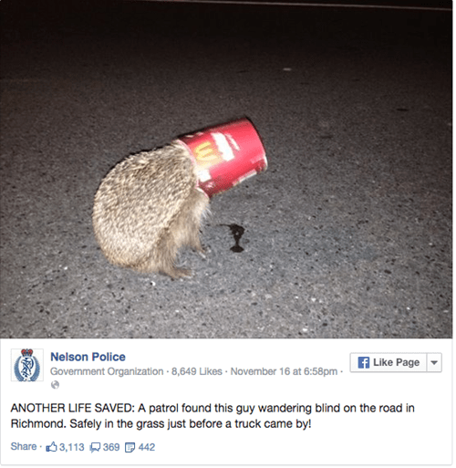 hedgehog,McDonald's,cute,rescue