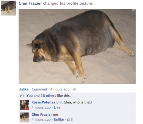 dogs,facebook,profile pictures