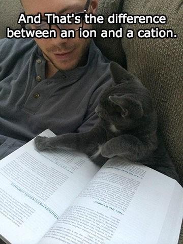 homework science Cats - 8380725248