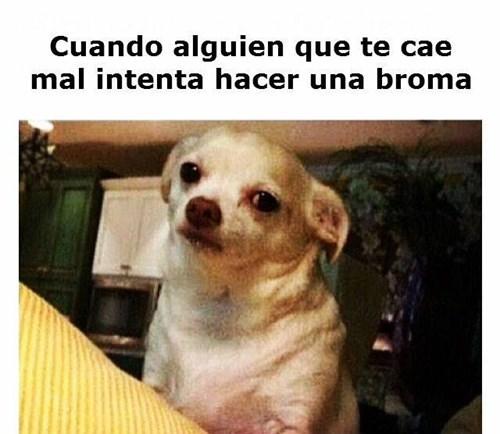 bromas Memes - 8380844544