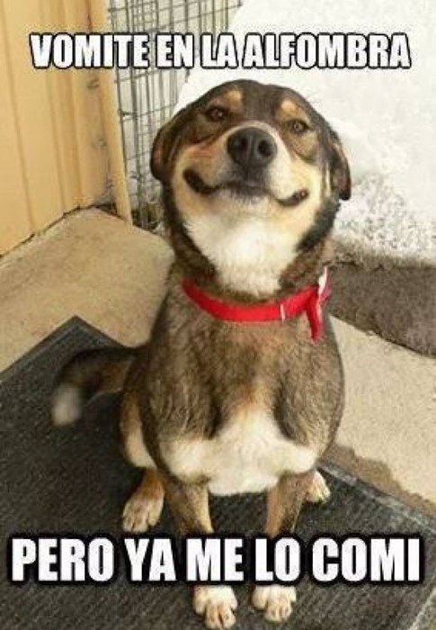 bromas perros Memes animales - 8380850944