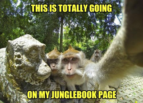 facebook monkey selfie - 8380890112