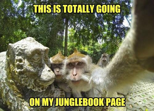 facebook monkey selfie - 8380890112