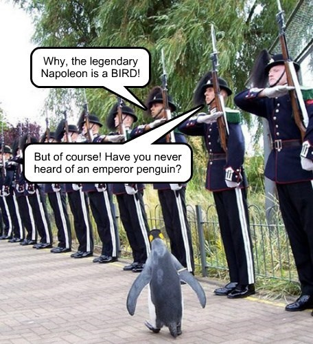 Why, the legendary Napoleon is a BIRD! But of course! Have you never heard of an emperor penguin?