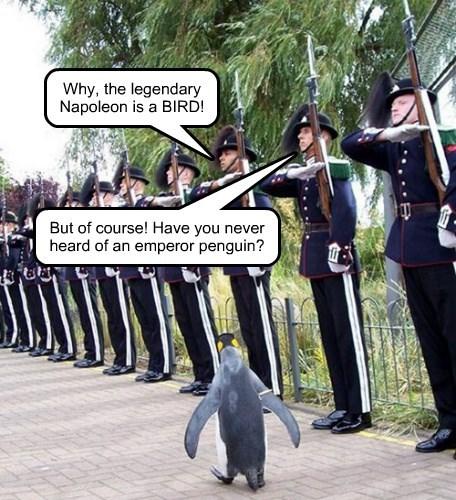 napolean emperor penguin - 8380901632