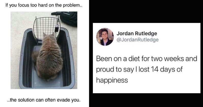 stupid memes twitter tumblr random memes dumb memes funny memes funny tweets Cats - 8380933