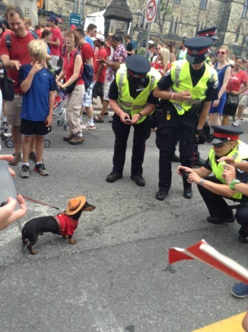 cops,dogs,photo op,cute