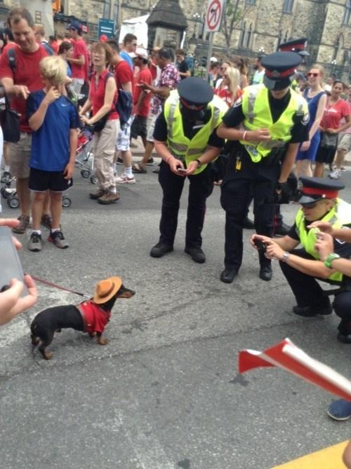 cops dogs photo op cute - 8380957184