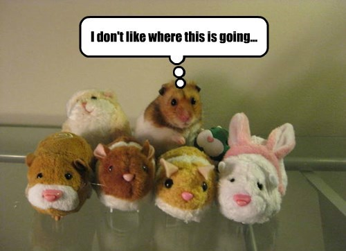 stuffed animal,What is happening,hamster,squee