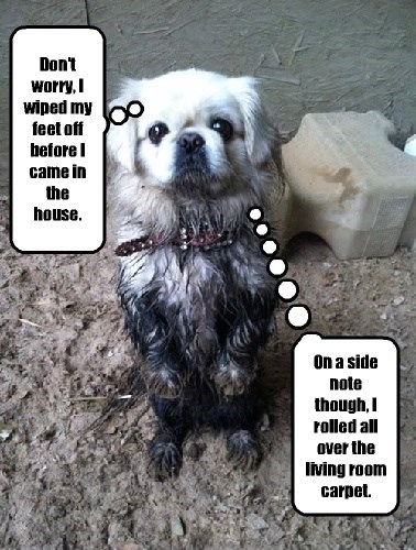 dogs,whoops,muddy,dirty