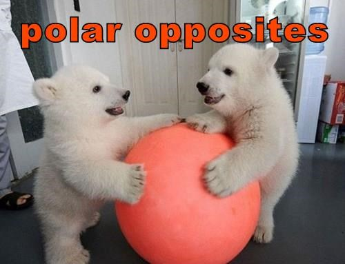 ball,puns,polar bears