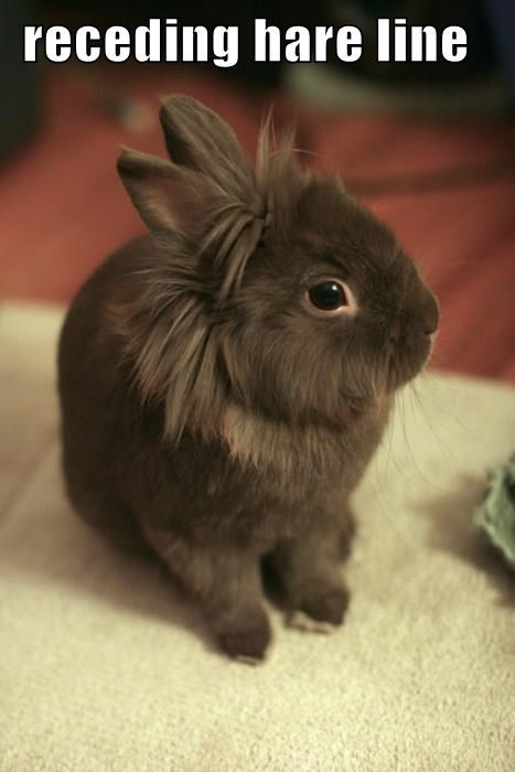 animals hair puns bunny - 8381188864