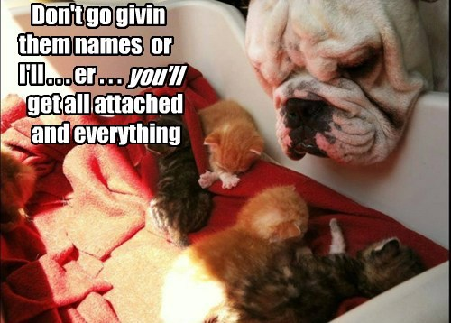 dogs attached kitten names caption - 8381313792