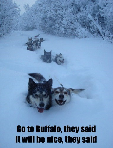 storm snow huskies buffalo - 8381459712