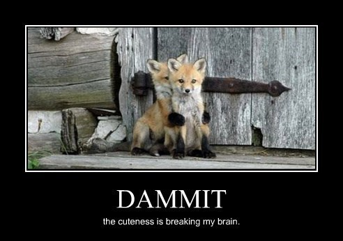 dammit,fox,brain,funny