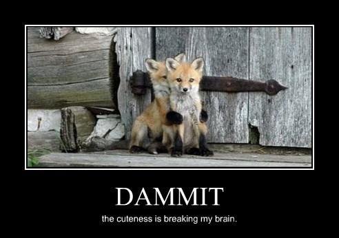 dammit fox brain funny - 8381494784