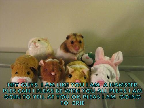 animals - 8381560064