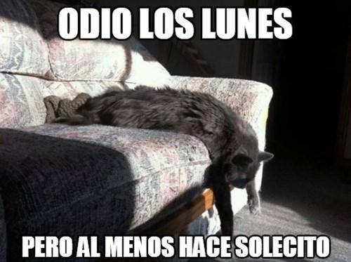 gatos Memes animales - 8381599232