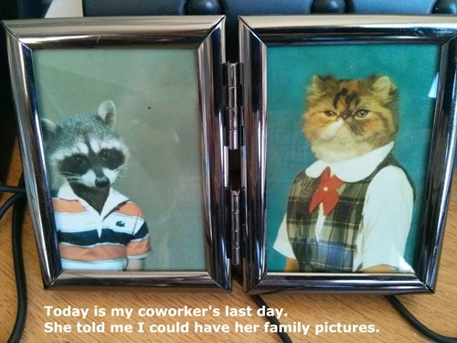 monday thru friday,coworkers,gift,Photo,raccoons,Cats